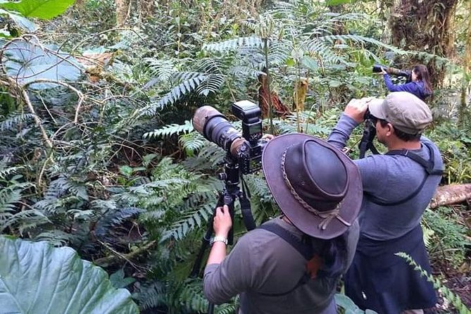 Birding Tour - Cloud Forest To Manu National Park