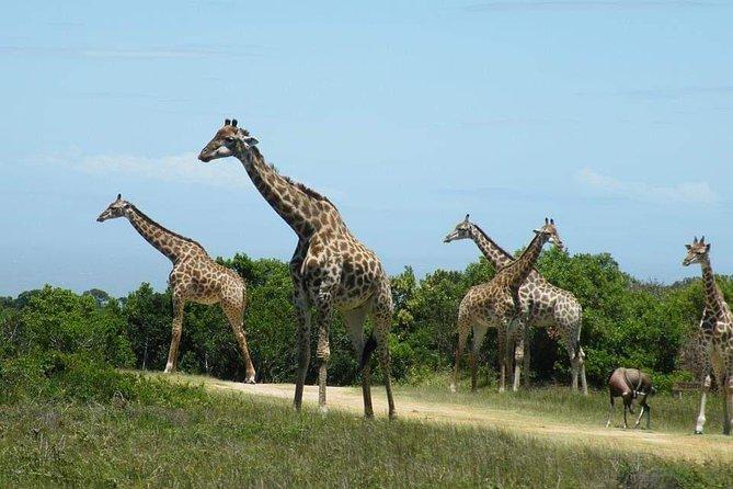 7 Days Camping Safari Tour Tanzania