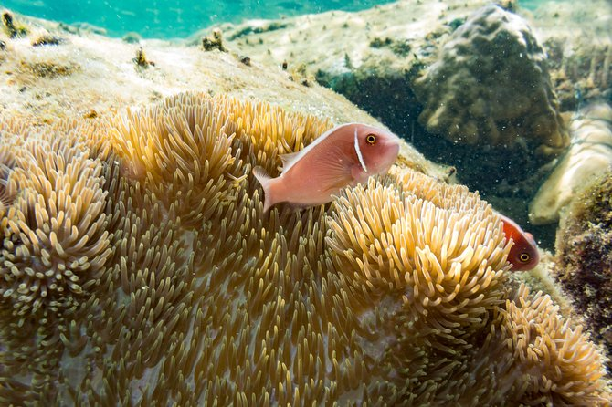 Chumphon full day snorkelling in 4 islands