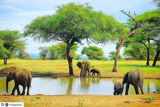 1 Day Luxury Lodge Safari To Tarangire National Park