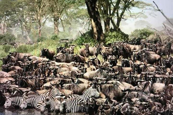 Manyara, ngorongoro, olduvai, Serengeti 4 days