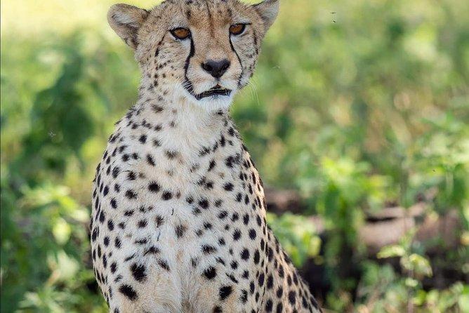 8 Days Budget Mid Range Safari Tour Tanzania