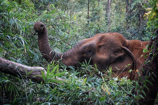 5 Days Private Guide Tour Hidden Adventure of Cambodia Kratie & Mondulkiri