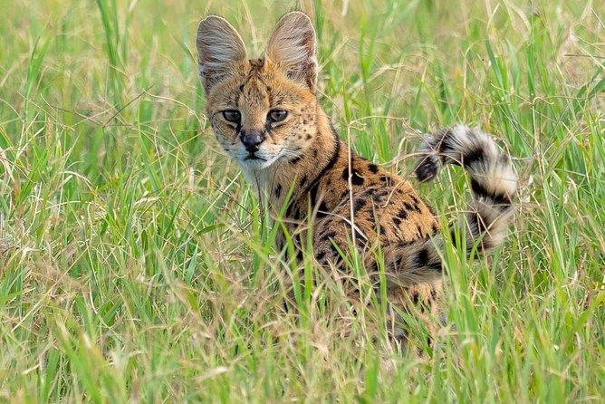 8 Days Luxury safari Tour Tanzania