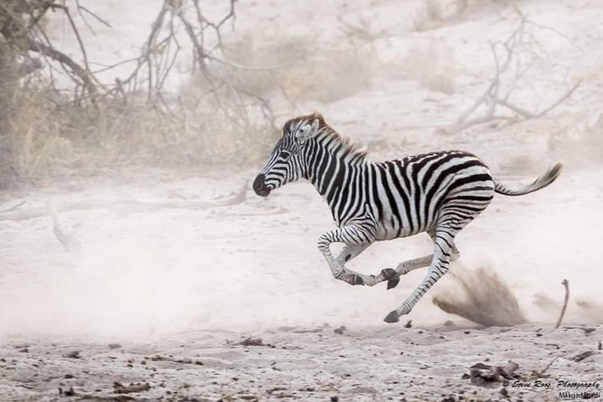 Tanzania Safari Arusha National park Day Trip