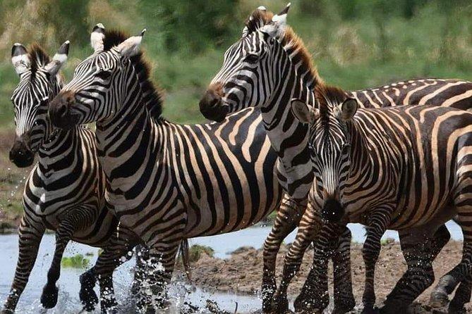9 Days Budget Lodge Safari Tour Tanzania