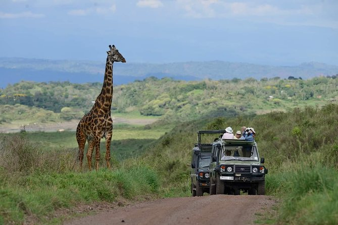 Full-Day Trip to Ngorongoro Crater from Arusha Town