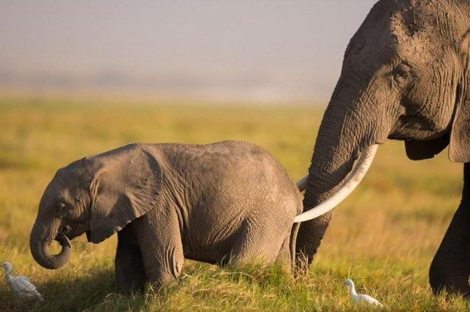 5 Days 4 Nights Budget Amboseli Tsavo Safaris