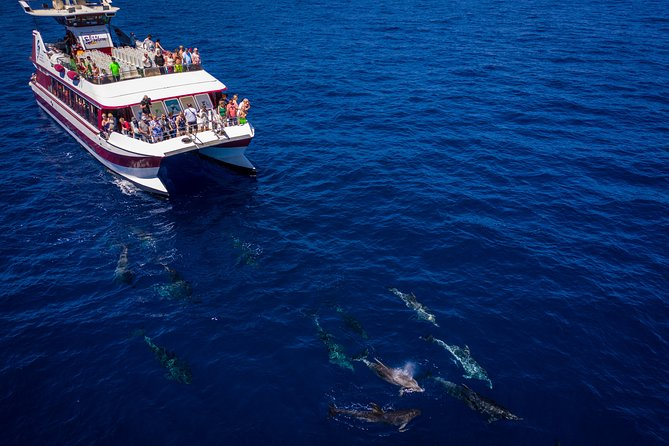 2Hour Sustainable Dolphin & Whale Watching Mini Cruise