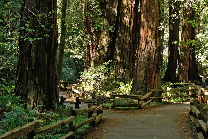 2-Day Muir Woods and Wine Country Tour from San Francisco photo 8