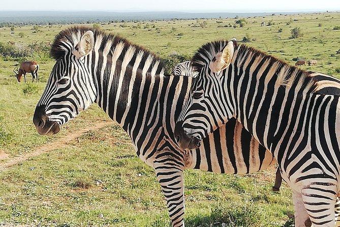 3 Day Karoo Wildlife Adventure: 3 x National Parks