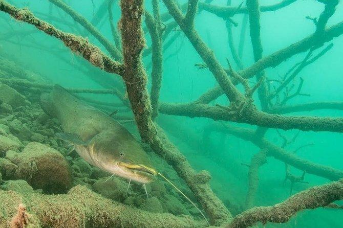 Diving Bled