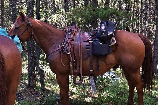 Canadian Horseback Adventure