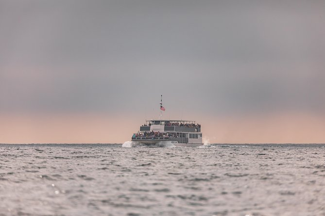 Whale-Watching Cruise from Newport Beach photo 6