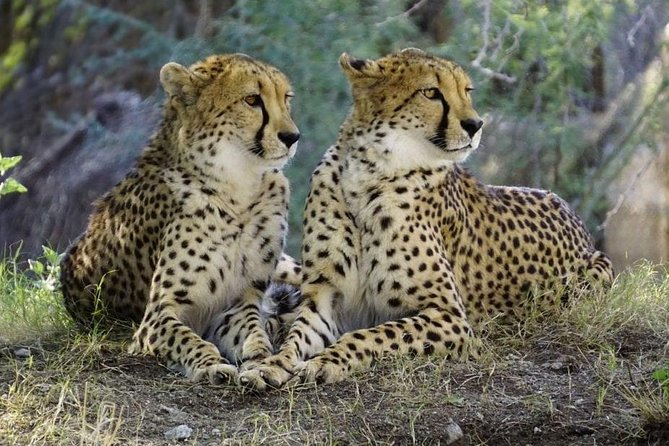 Day Tour: Lake Manyara National Park