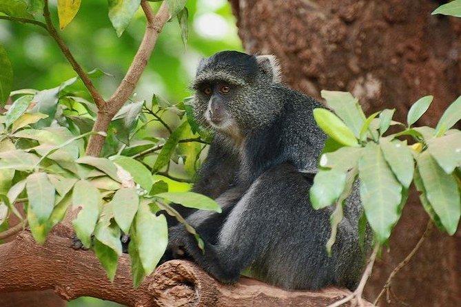 10 Days Luxury Safari Tour in Tanzania