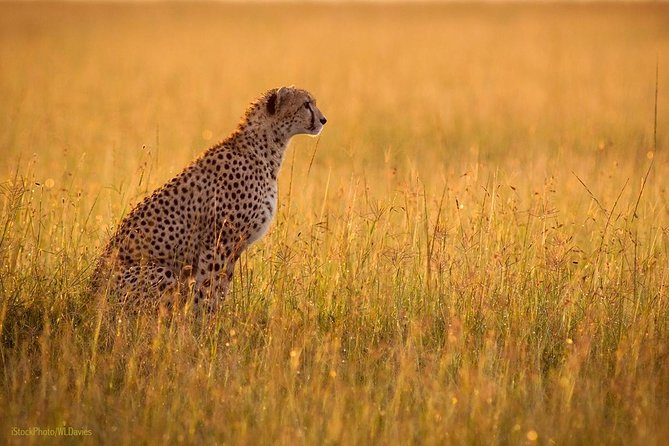 Day Tour: Ngorongoro Conservation Area