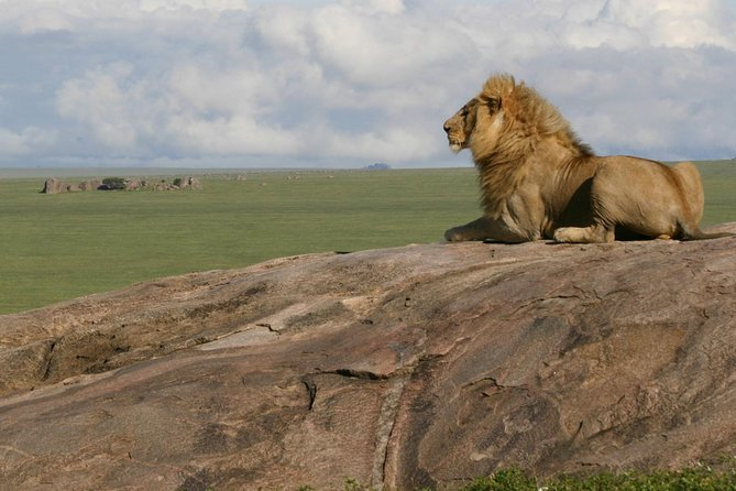 3 Days Join Group Trip To Serengeti And Ngorongoro photo 2