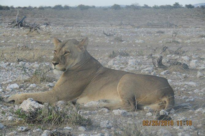 6 Days Etosha, Swakopmund & Sossusvlei Budget (Lodging)