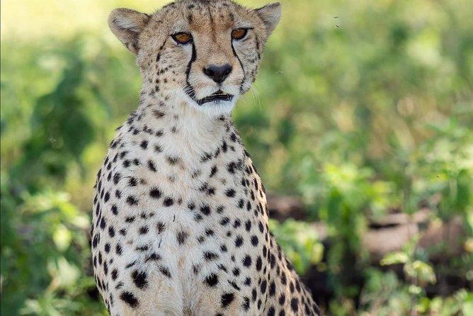 7 Day Private Mid Range Big Five Safari to Tanzania Park