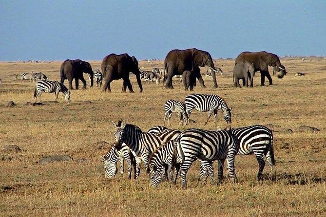 6 Days 5 Nights Kenya Budget Safaris