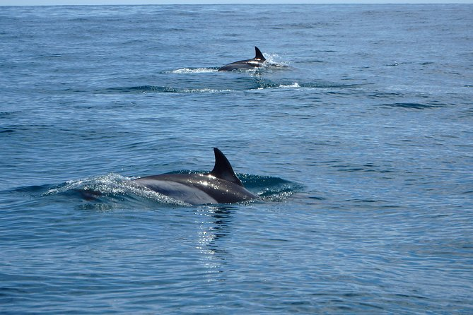 Dolphin Route