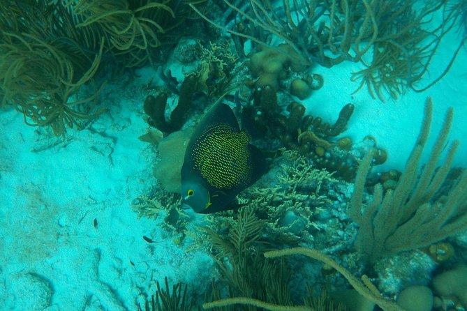 Snorkel Trip (Local Native Guide)