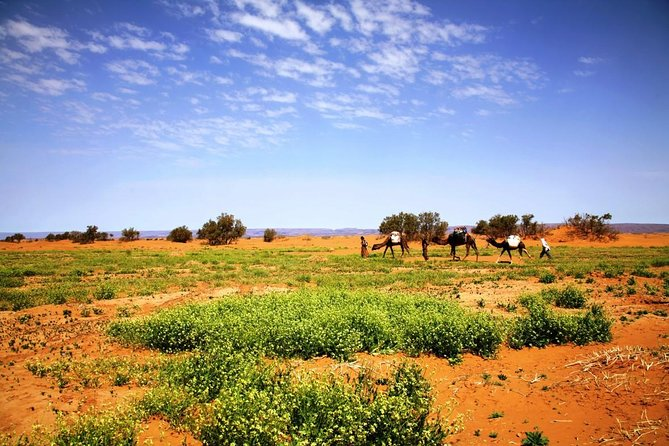 Private Tour 11 Days from Casablanca to Imperial Cities And Sahara Desert