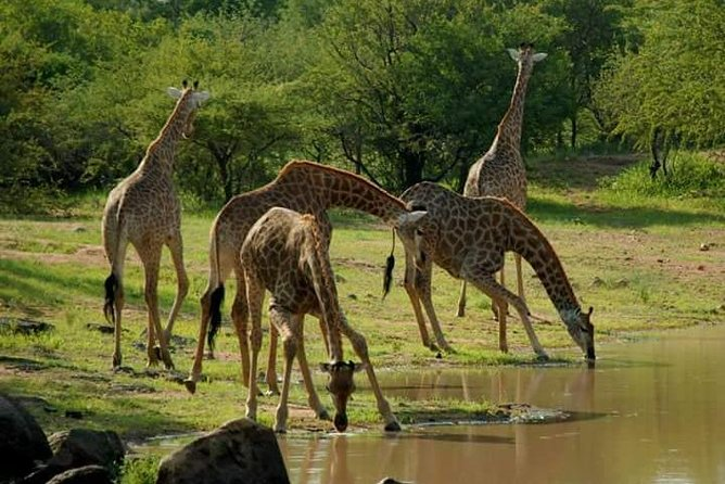 Serengeti, ngorongoro, manyara 5 days 4 night