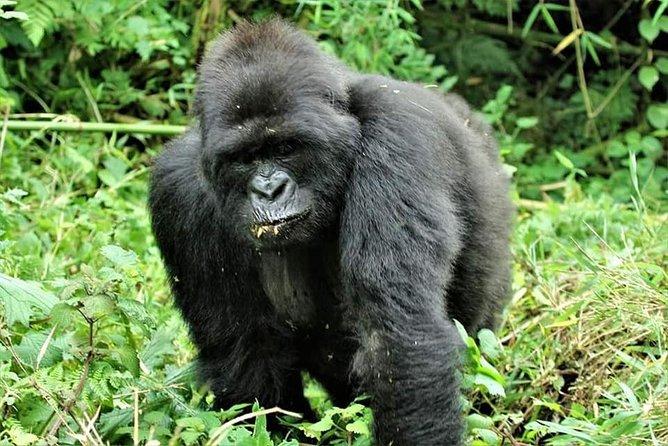 Uganda 4 days Gorilla Trekking