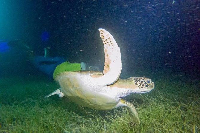 Moonlight Bioluminescence Snorkeling Tour in Cancun
