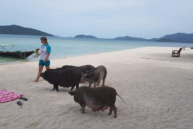 Snorkeling & Pig Island Experience photo 18