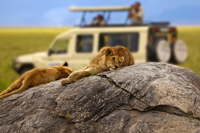 10 Days Perfectly Family Luxury Safari Tour Tanzania photo 7