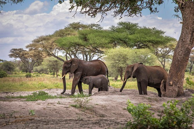 10 Days Perfectly Family Luxury Safari Tour Tanzania photo 18