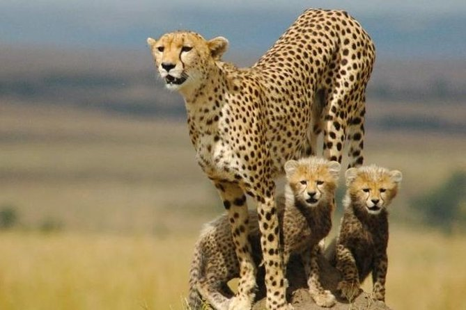 10 Days Perfectly Family Luxury Safari Tour Tanzania photo 15