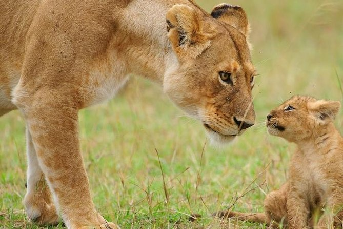 10 Days Perfectly Family Luxury Safari Tour Tanzania photo 3