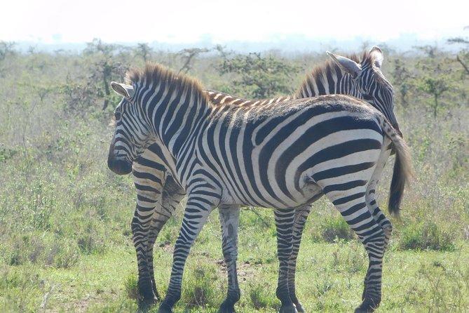 3 Days Masai Mara Flying Safari - Nairobi