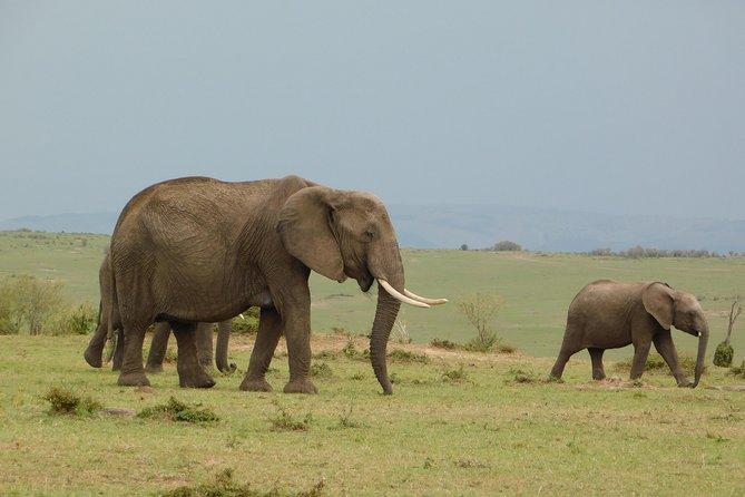 8 days Kenya discovery safari - NAIROBI