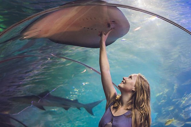 Dubai Mall Aquarium & Underwater Zoo Basic Tickets