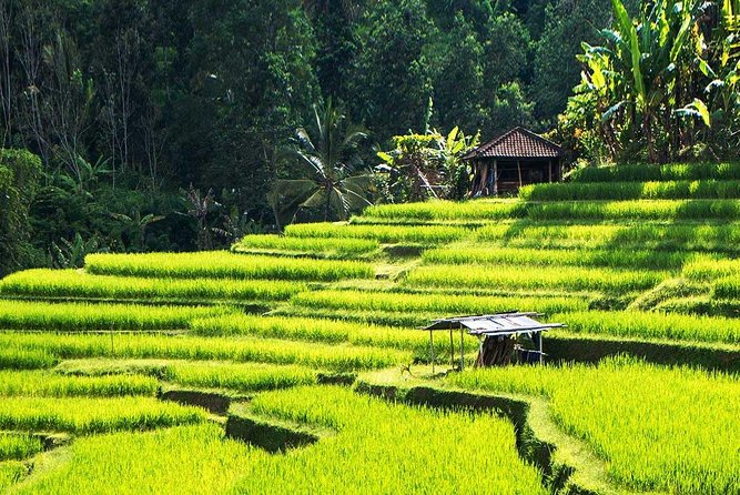 Authentic Ubud Nature Walk