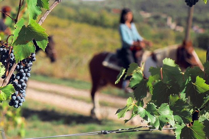 Explore the beautiful Chianti region by horseback during your day trip from Florence