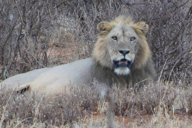 7 Days Bigfive Safari - NAIROBI