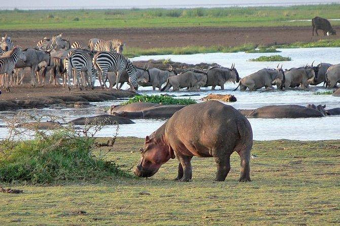 6 days safari to Lake Manyara, Tarangire, Serengeti and Ngorongoro crater