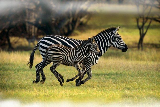 7 Day Samburu, Mt. Kenya, Lake Nakuru and Maasai Mara