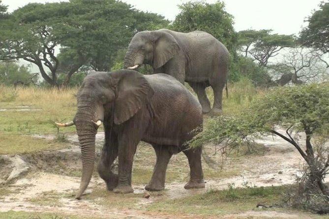 6 Days 5 Nights Luxury Keny Safari