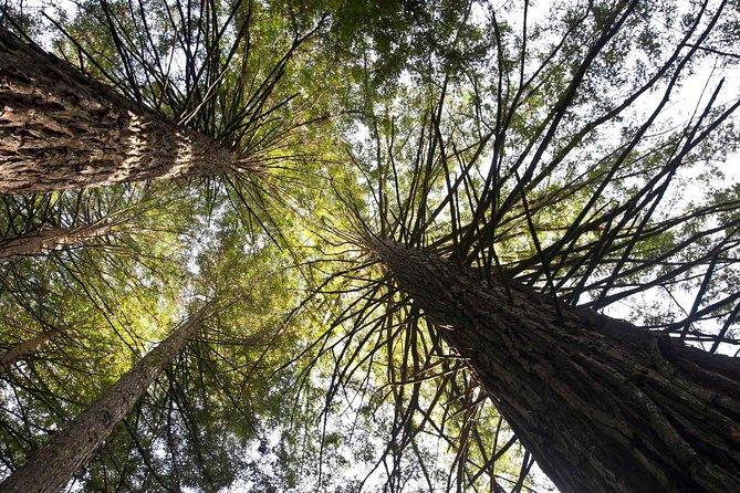 Visitation Ticket - Sequoias Park - Cinnamon