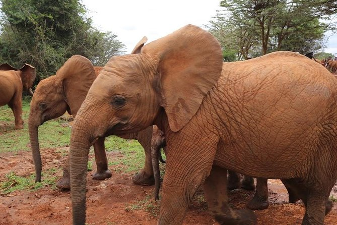6 days Tsavo East - Amboseli -Tsavo West National Park Experience