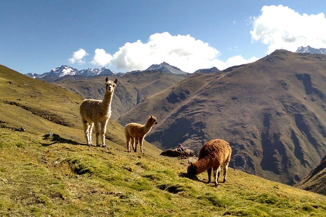 Salkantay Trek to Machu Picchu in 4 Days