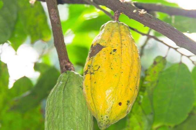 Escape Accra City to Aburi Gardens and Tetteh Quarshie Cocoa Farms photo 11