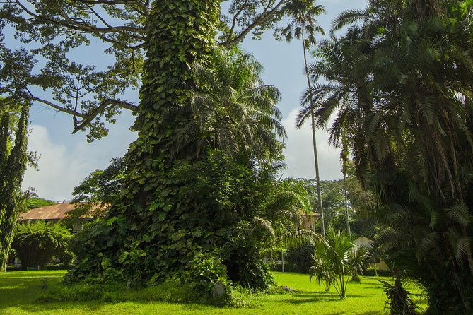 Escape Accra City to Aburi Gardens and Tetteh Quarshie Cocoa Farms photo 6